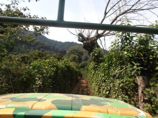 Apaneca Canopy Tour: camino hacia el canopy, en el camión