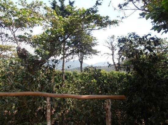 Apaneca Canopy Tour: camino entre las líneas