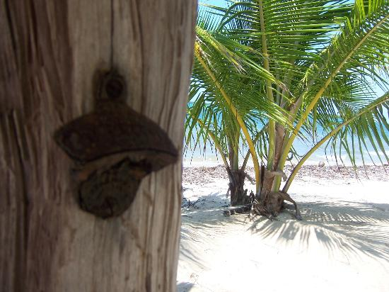 Barnacle Bill's Beach Bungalows: Palapa on the beach