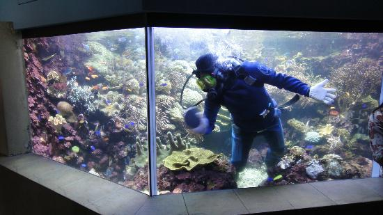 ... World and Dolphin Lagoon: Scuba diver cleaning the glass aquarium