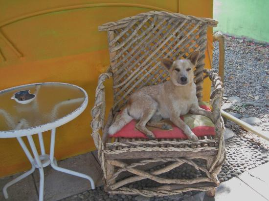 El Encanto: One of Jim's charming dogs (Pinky)