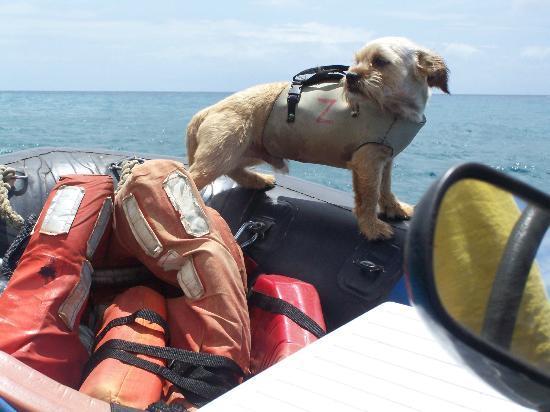 Bali Hai Boat Tours: Wodie the SeaDog!
