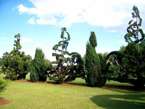 Fryar's Topiary Garden: slinky and tall