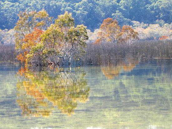 Lake Birrabeen: perfect reflections