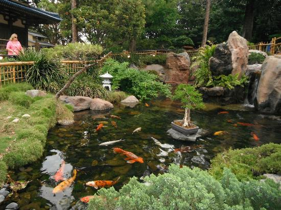 Serene koi fish pond japan picture of epcot orlando for Koi pond japan