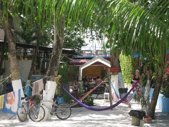 Weary Traveler Hostel : Weary Traveler back patio