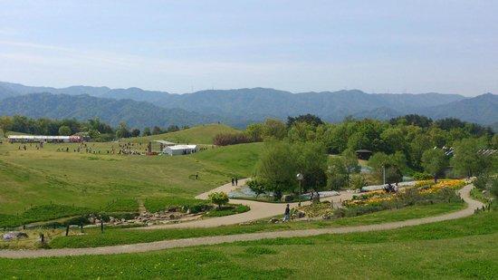 Manno-cho, Japan: landscape1