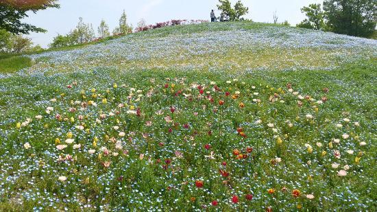 Sanuki Manno Park: landscape2