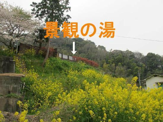 Ichinoide Kaikan: 菜の花畑の上にあり