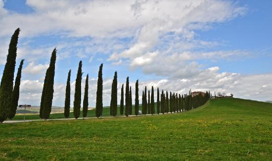 Tuscan Wine Tours with Angie