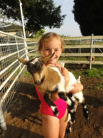 Silver Oaks Ranch : Lucy with one of the adorable baby goats