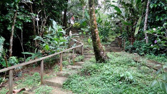 Tesoro Escondido : Escaliers qui emmenent à la plage privée en bas du logement