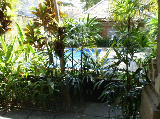 Wahyu Bungalow: View from room terrace to pool...leafy & private!