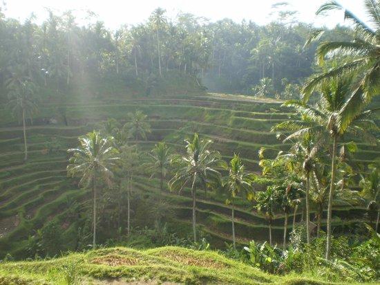 Wahyu Bungalow: Beautiful Ubud!