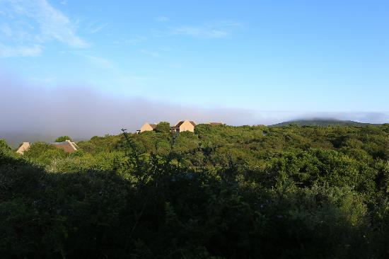 Addo Rest Camp: Resort grounds lush and green
