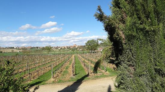 Montepulciano Country Resort: La vigne