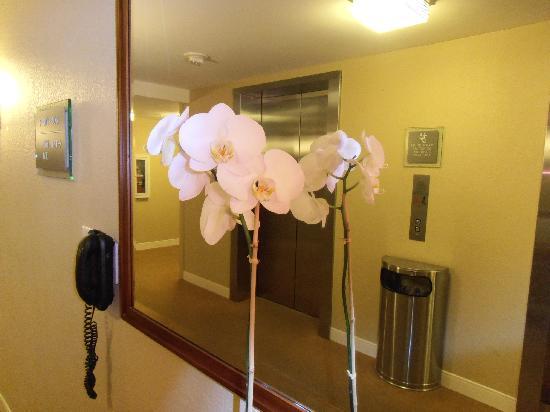 The Westin Beach Resort, Fort Lauderdale: Decorado de orquídeas en todos lados