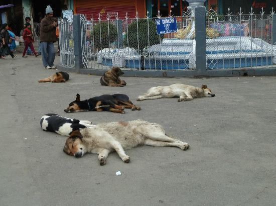 โฮเต็ล แอนด์ เรสเตอรองท์ แชงกรี-ลา: The ubiquitous sleeping dogs