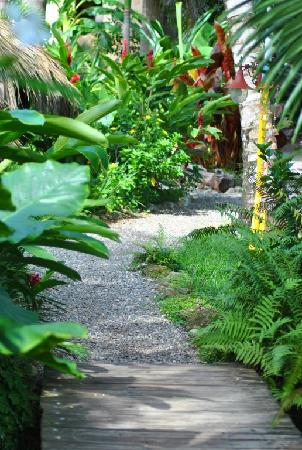 Cabarete Surfcamp: Tropical Surf Camp garden