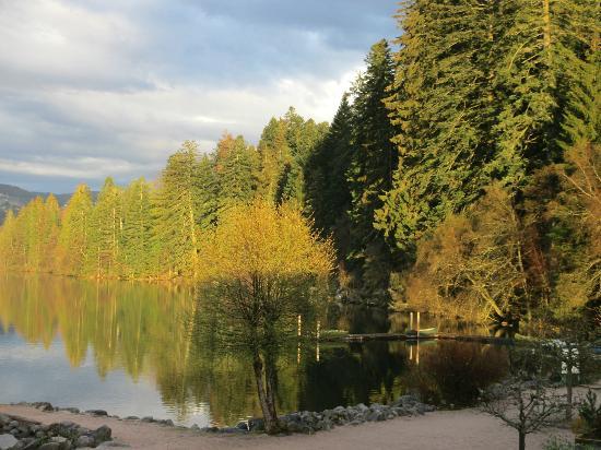 Appart'hotel Lido Gerardmer: Aperçu de la vue du séjour