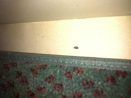 La Quinta Inn Cocoa Beach: Bed Bug