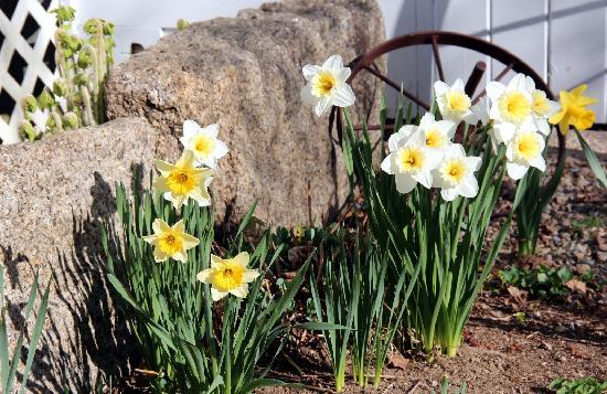 Buttonwood Inn on Mount Surprise: Award winning gardens surround the Inn
