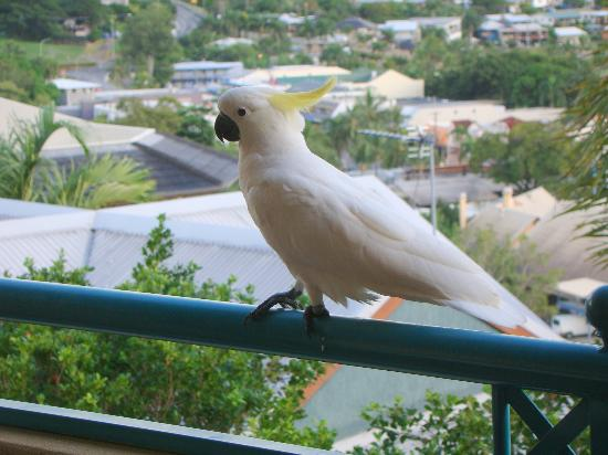 Toscana Village Resort: A friendly cockatoo on the balcony