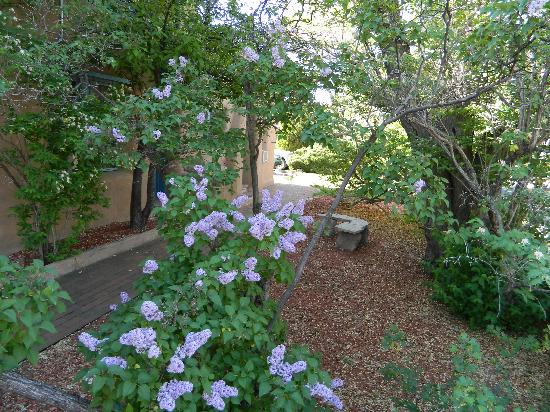 Pueblo Bonito Bed and Breakfast Inn: Springtime bring lilac, honeysuckle and beauty within our beautifully landscaped grounds.