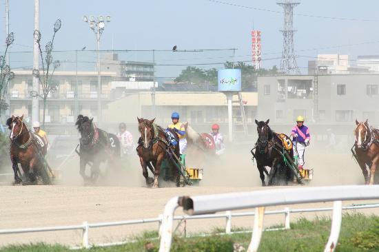 Banei Tokachi Obihiro Horse Race Track : 迫力満点