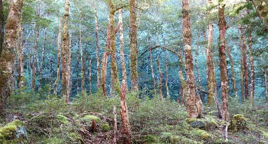 Travers-Sabine Lodge: The Beech forest