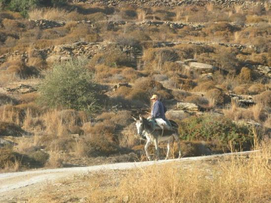 Awake Paros Watersports & Bike Tours: Hike from Drios to Lefkes
