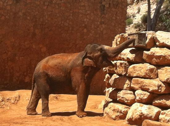 Tisch Family Zoological Gardens (Biblical Zoo): Elephant in the Zoo
