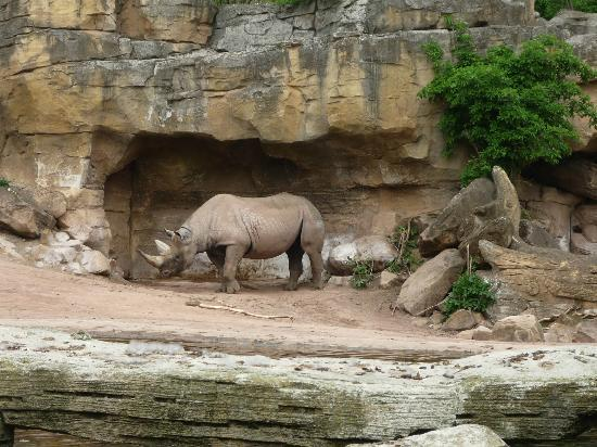 Erlebnis Zoo Hannover: Zoo di Hannover