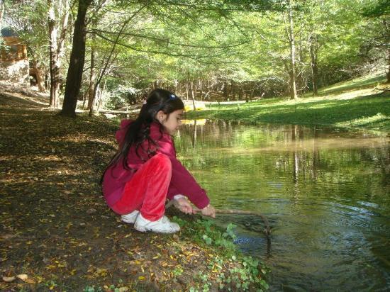 Villa General Belgrano, Argentina: El arroyo atras de nuestra cabaña