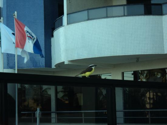Hotel da Costa: Área da piscina. Um bem-tivi