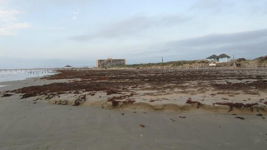 IB Magee Beach Park: View of beach towards the fishing pier, mother nature was not kind this week