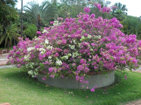 National Botanical Garden: Jardin Botanique