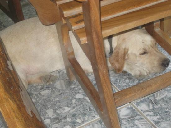Giardino Tropicale: hotel dog