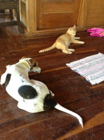 Giardino Tropicale: hotel pets