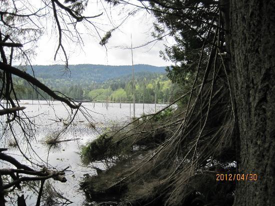 Bowen Island Hideaway: K9llarney Lake