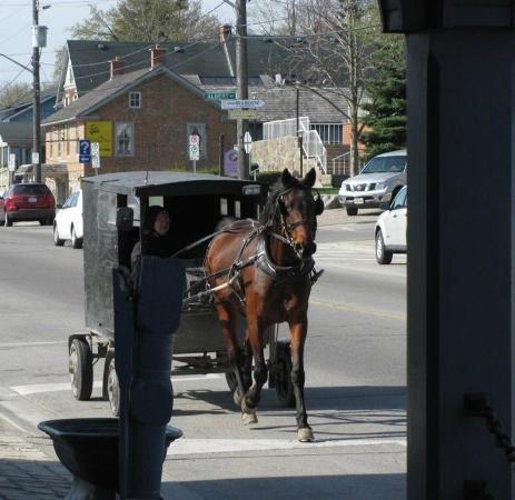 Benjamin's Restaurant & Inn : Old Order Mennonite horse and buggy