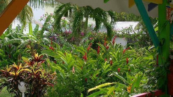 le jardin tropical picture of fleurs des iles deshaies tripadvisor. Black Bedroom Furniture Sets. Home Design Ideas
