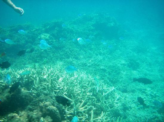 Aharen Beach: たくさんの熱帯魚を見ることができます