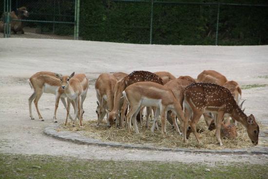 Tierpark Hellabrunn: Regroupement d'antilopes