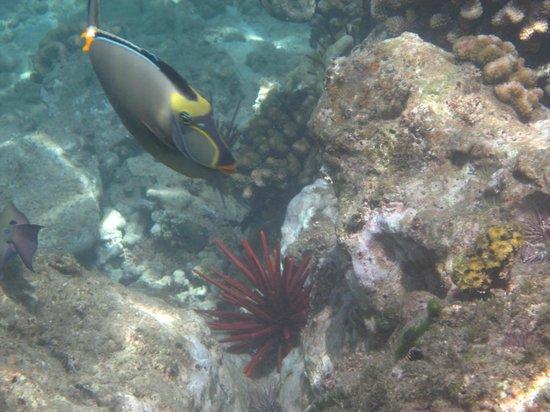 Ulua Beach: humahuma