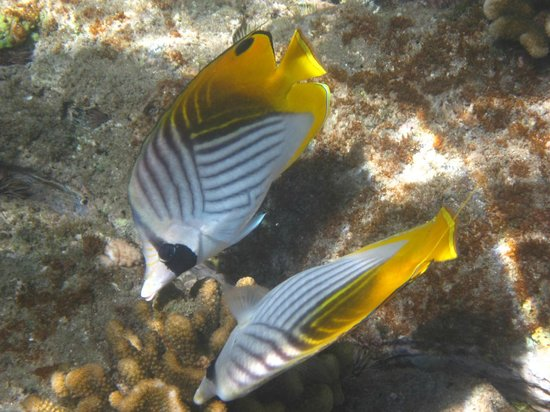 Ulua Beach: fish