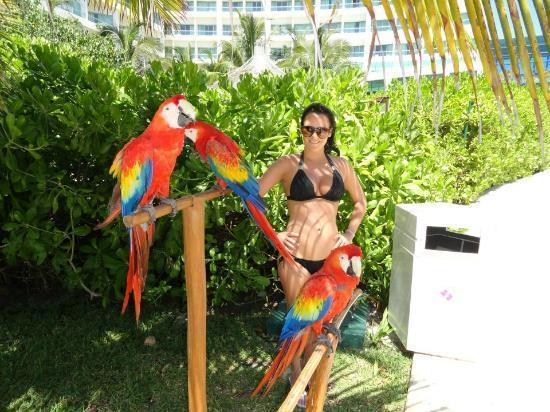 Live Aqua Cancun All Inclusive : The three resident parrots