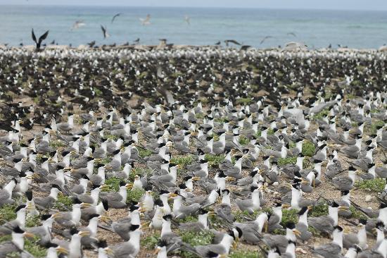 Avillion Layang Layang: Birds of Layang Layang
