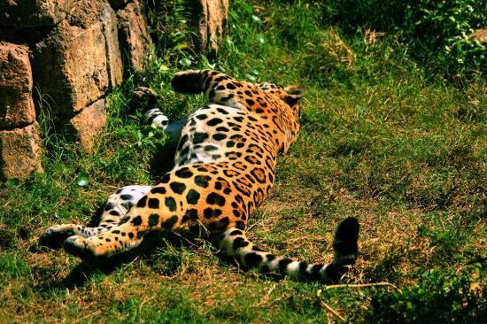 Jacksonville Zoo & Gardens : Roar!
