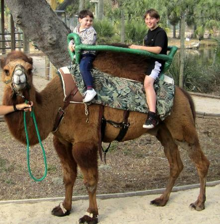 Tampa's Lowry Park Zoo: 4 tokens per ride